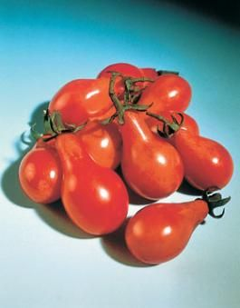 <p>Pomodoro red little pear</p>