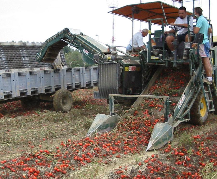 Pomodoro da industria concimi e fertilizzanti per la for Concime per pomodori