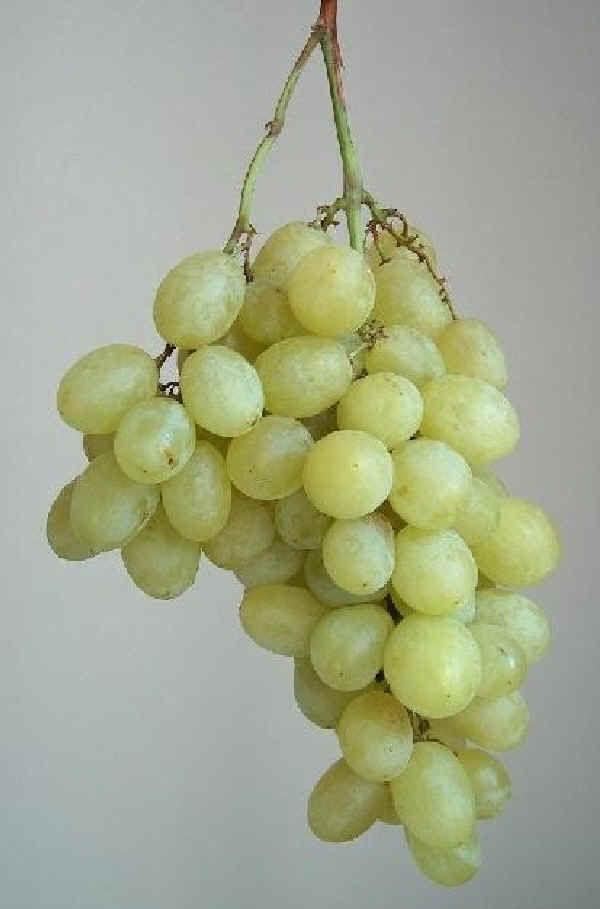 Uve da tavola fertilizzanti per cura delle piante di vite - Piante uva da tavola ...