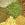 Leguminose e Piante da tubero