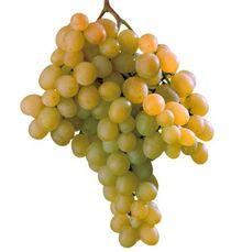 Uve da tavola concimi e fertilizzanti per la cura delle - Piante uva da tavola ...