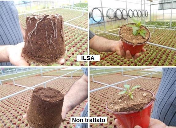 Biostimolanti per piante ornamentali in vaso ilsa group for Peperoncino in vaso