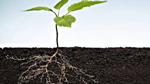 Come vivono le radici? | ILSA GROUP
